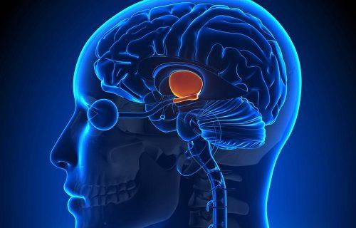 Multitasking et cerveau